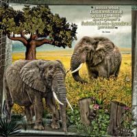 Elephants Are Faithful~
