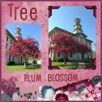 PLUM BLOSSOM TREE - A TREE OF COLOR