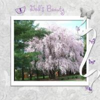 God's Beauty in a tree
