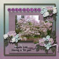 Tree of Color magnolias