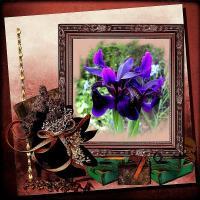 A blue Iris