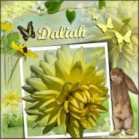 Daliah for Frame a Flower