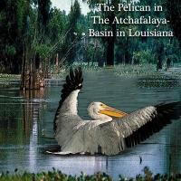 The Pelican Our Louisiana Bird#2