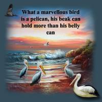 What a Marvellous Bird