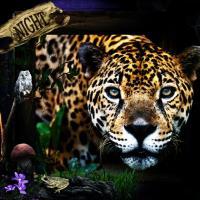 Nocturnal Leopard