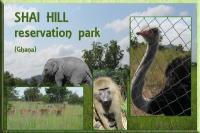 Shai Hill postcard