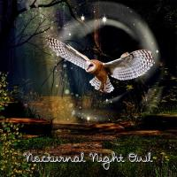 Nocturnal Night Owl