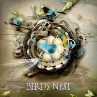 Bye Bye Blackbird~Bird's Nest~