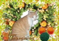 Carmelo Thanksgiving