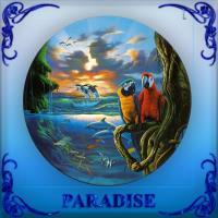 Paradise Is Above & Below The Ocean