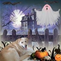 Halloween Pet Scene 2014 with Leia