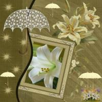 UMBRELLAS over Easter Lilies