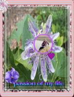 my passion flower