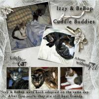 We love our pets-Izzy & BeBop