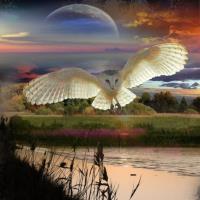 ** Evening Flight **