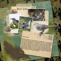 The Cries of a Mockingbird