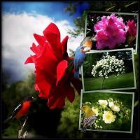 Flowers from Botanical Garden Oslo