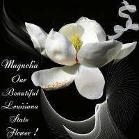 The Beautiful White Magnolia
