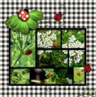Ladybugs In The Garden