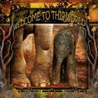 Welcome Baby Elephant