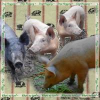 Pigs Page