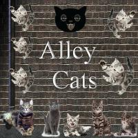 Alley Cats Lost