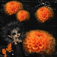 orange passion