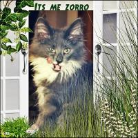 Its Me, Zorro