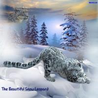 **The Beautiful Snow Leopard**