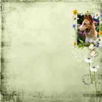 Leda- my friend s dog.