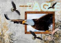 Soar like and eagle out of bounds!
