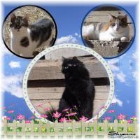 cats circle