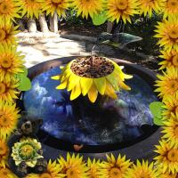 My Sunflower Old Fountain
