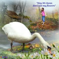 **Bethan and the Swan**