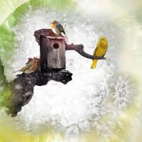 Birds & Birdhouse challenge