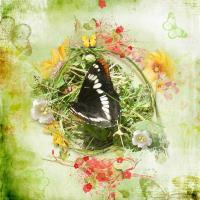 equinox meadow-butterflies