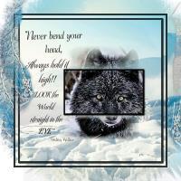 Wolf Eyes - 2017