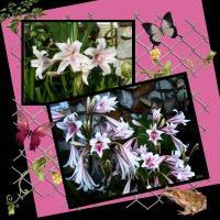 Lillies ~2