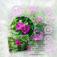 My Wild Roses