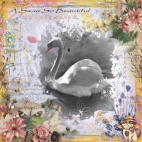 A Swan So Beautiful