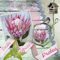Template chal Protea flower