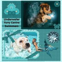 Underwater Furry Canine Swimmers