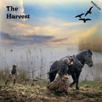 **The Harvest**