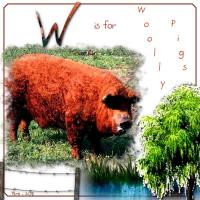 W Is For Woolly Pig