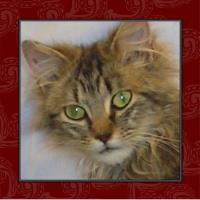 Icon Challenge - Kitty Icon # 3
