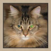 Icon Challenge - Kitty Icon # 4