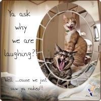 Laughing Cats - 2018