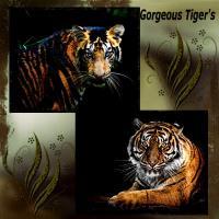 Beautiful Tiger's
