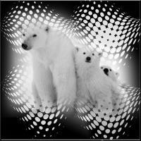 Poala Bears