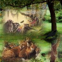 Wild Life Family